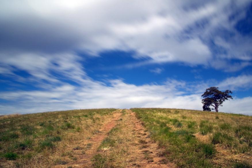 Lone Tree - Mount Osmond