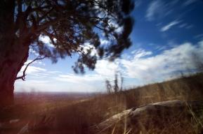 Tree and Log - Mt Osmond